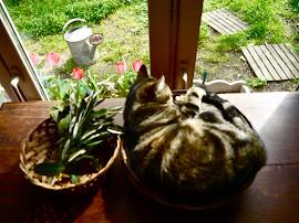 Avoir un oeil sur son jardin !!!
