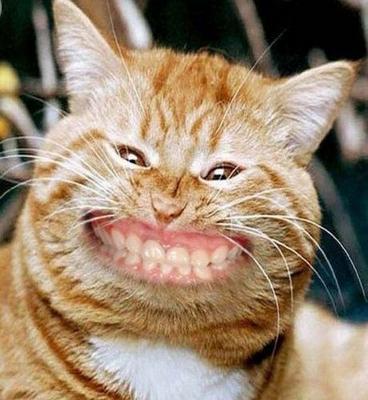 cat+smile.png