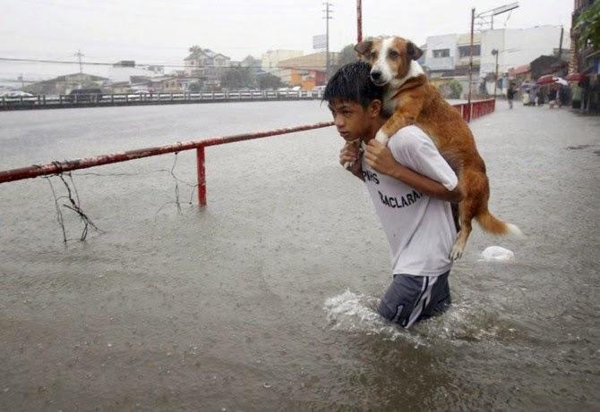 Gambar Mohammad Sofwan Selamatkan Anjing Hanya Rekaan