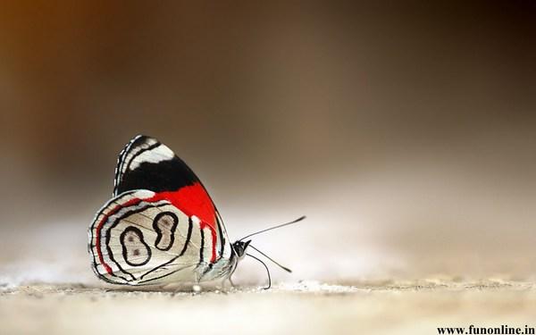 Desktop HD Butterfly Images