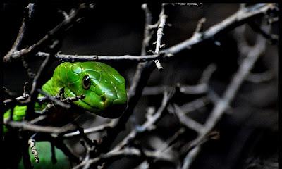 http://4.bp.blogspot.com/-QbaHNiPd1D0/UK4MovcK6yI/AAAAAAAANvg/cpG9VCeDMGQ/s640/green-snake.jpg