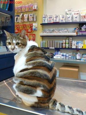 Những hình hài hước vui nhộn nhất, con mèo dễ thương