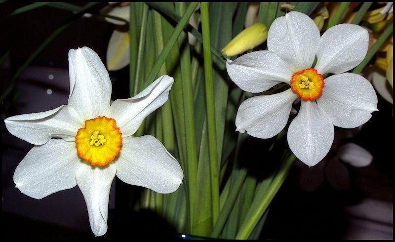 IMAGE: http://4.bp.blogspot.com/-QcBgzEXQFAo/VT_hjCoOM4I/AAAAAAAAISQ/Jo-Av4usknk/s1600/flowersSM.jpg