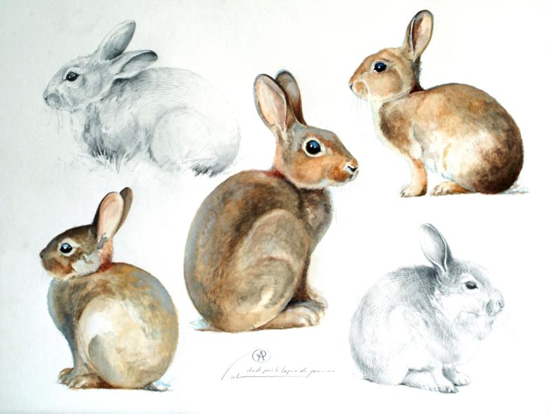 Le blog de blaise prud 39 hon peintre animalier lapins de garenne et li vre - Patte de lapin peinture ...