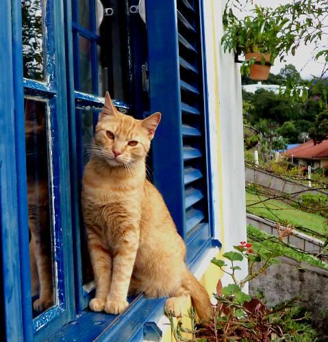 O poder de cura dos gatos. Clique na foto e assista.