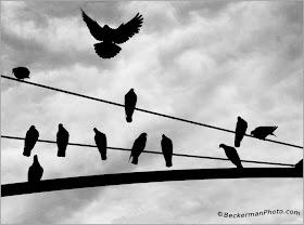 Mengapa Burung Yang Hinggap Di Kabel Listrik Tidak Kesetrum? [ www.BlogApaAja.com ]