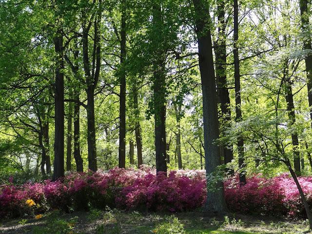 live and learn toss and turn brighton dam azalea garden