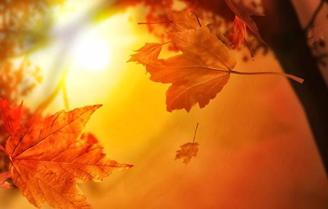 dios y la ciencia otoño