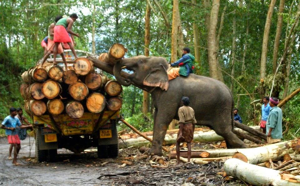 Kerala Tourism Elephants Used In Logging Forests