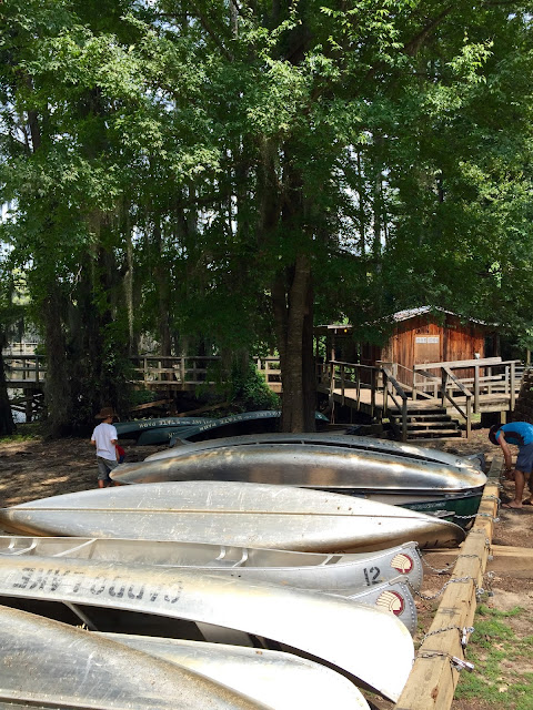 Les canoes de Caddo lake, alignés au bord du lac, prêts pour la balade.