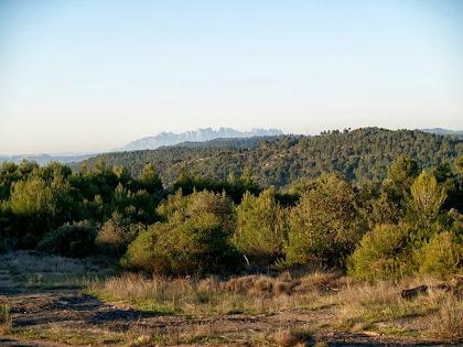 La muntanya de Montserrat des del llom del Serrat de l'Oca