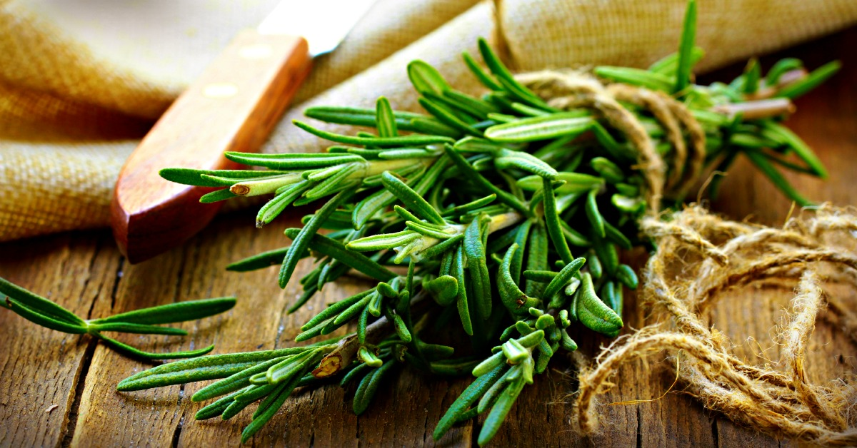 Rosemary Improves Memory and Cognition