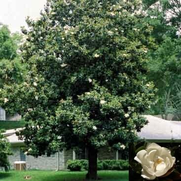 arboles medianos colecci n de hojas y flores