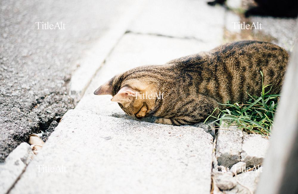 覗き込むのら猫の写真