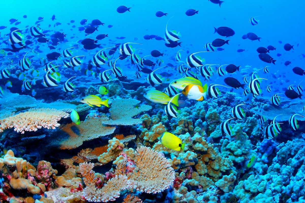 great barrier reef australia tourist destinations