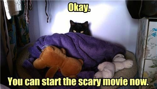Scared Cat - Okay - You Can Start The Scary Movie Now