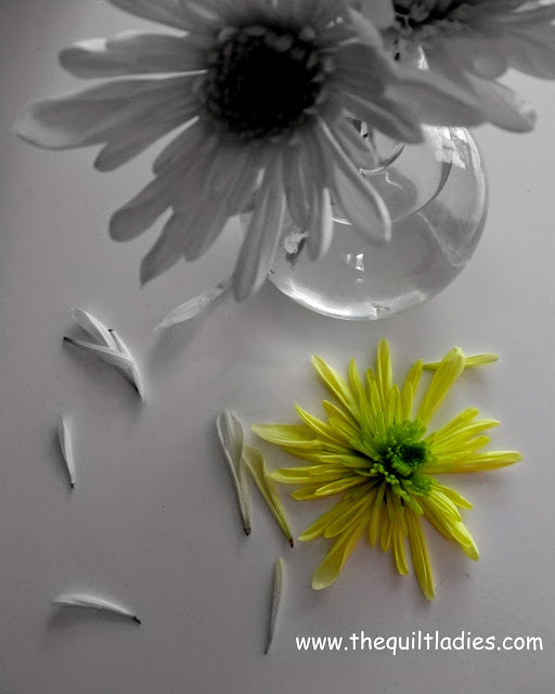 """A Yellow Mum"" in Black and White by Beth Ann Strub"