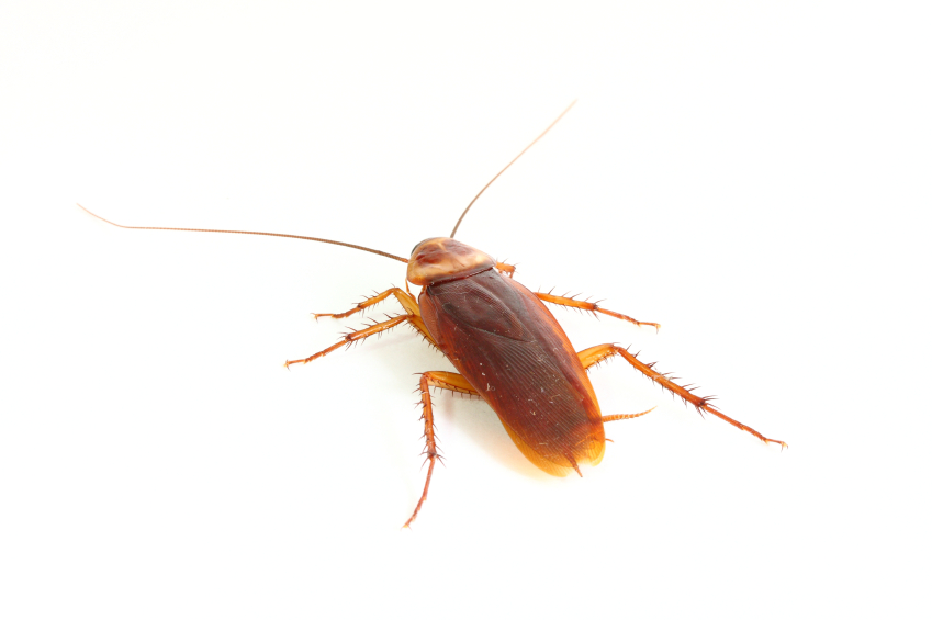 How do you get rid of roaches in electronics