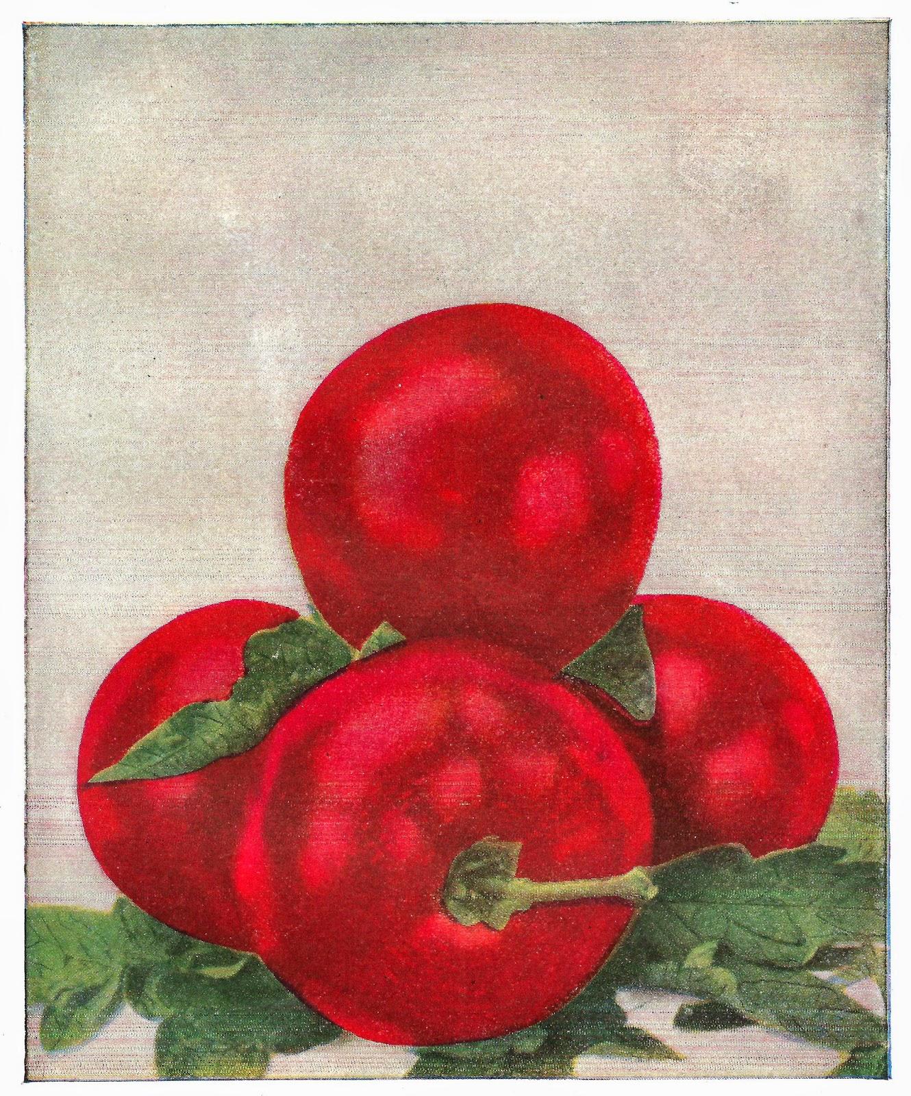 http://4.bp.blogspot.com/-QfCmYaKenq4/U4Ugl3Pd8oI/AAAAAAAAUC8/Oo7ydO42kQA/s1600/tomato_3.jpg