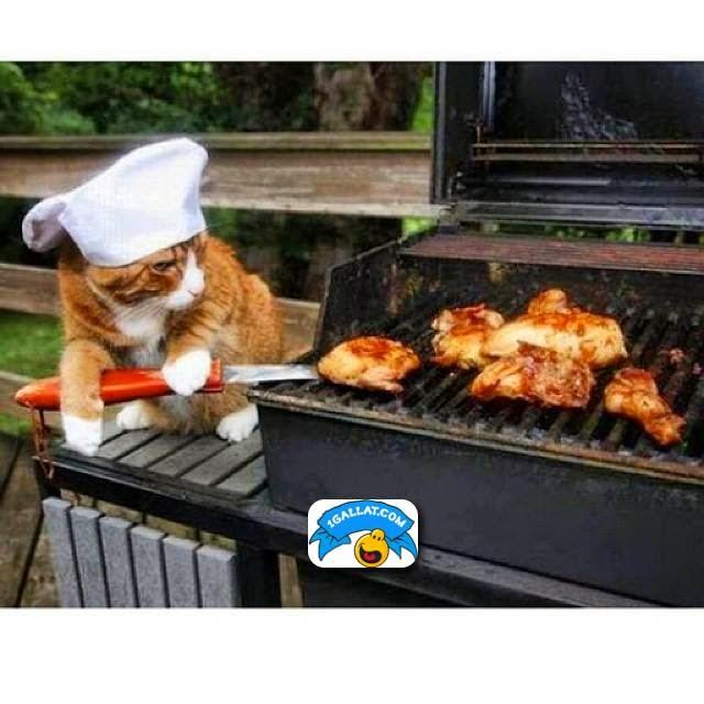 GATIME : Nje Kuzhinier Perfekt
