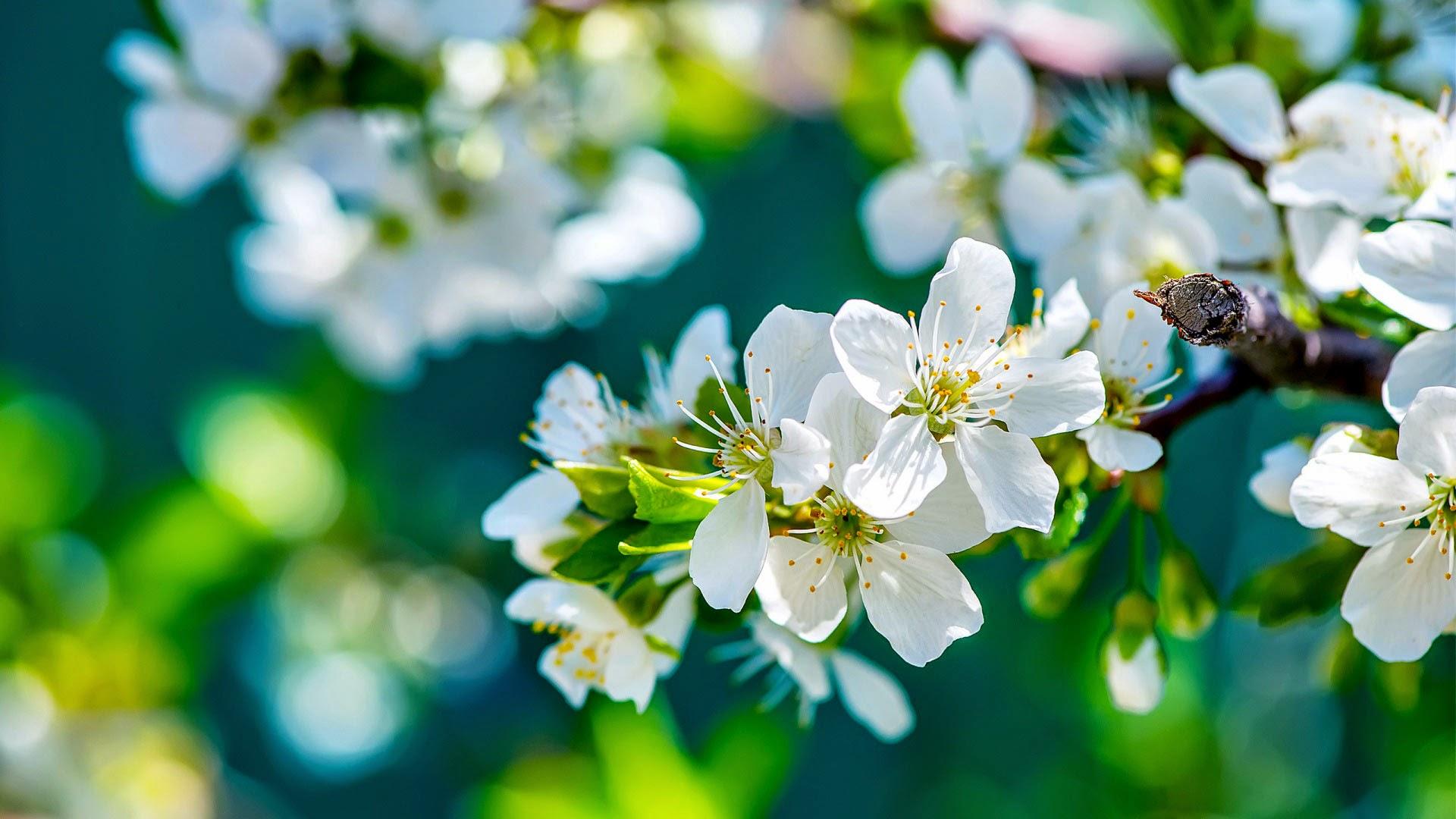 Papel de Parede Flores da Maçã Papel de Parede 3D DNA para pc hd 3d grátis flowers wallpapers hd image free
