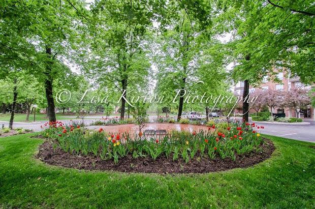 The Arboretum Condos Oakville