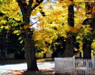Golden Road Autumn 2006