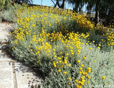 malta chinese garden