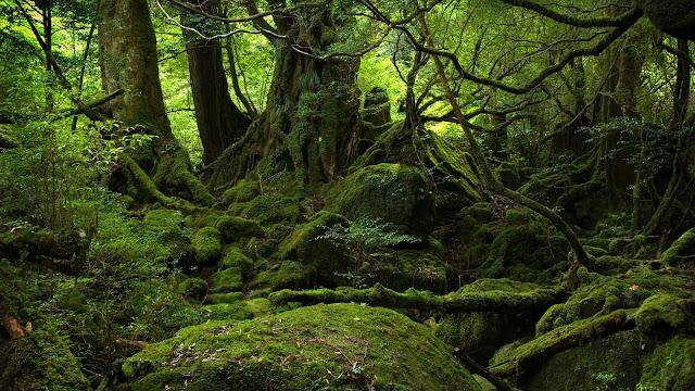 hinh nen dep khu rừng xanh kỳ bí