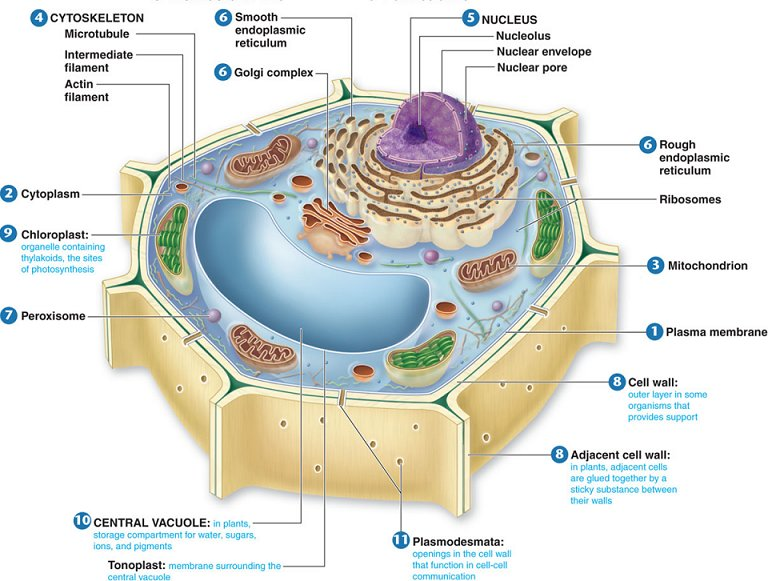 Go Back > Gallery For > 3d Plant Cell Structure