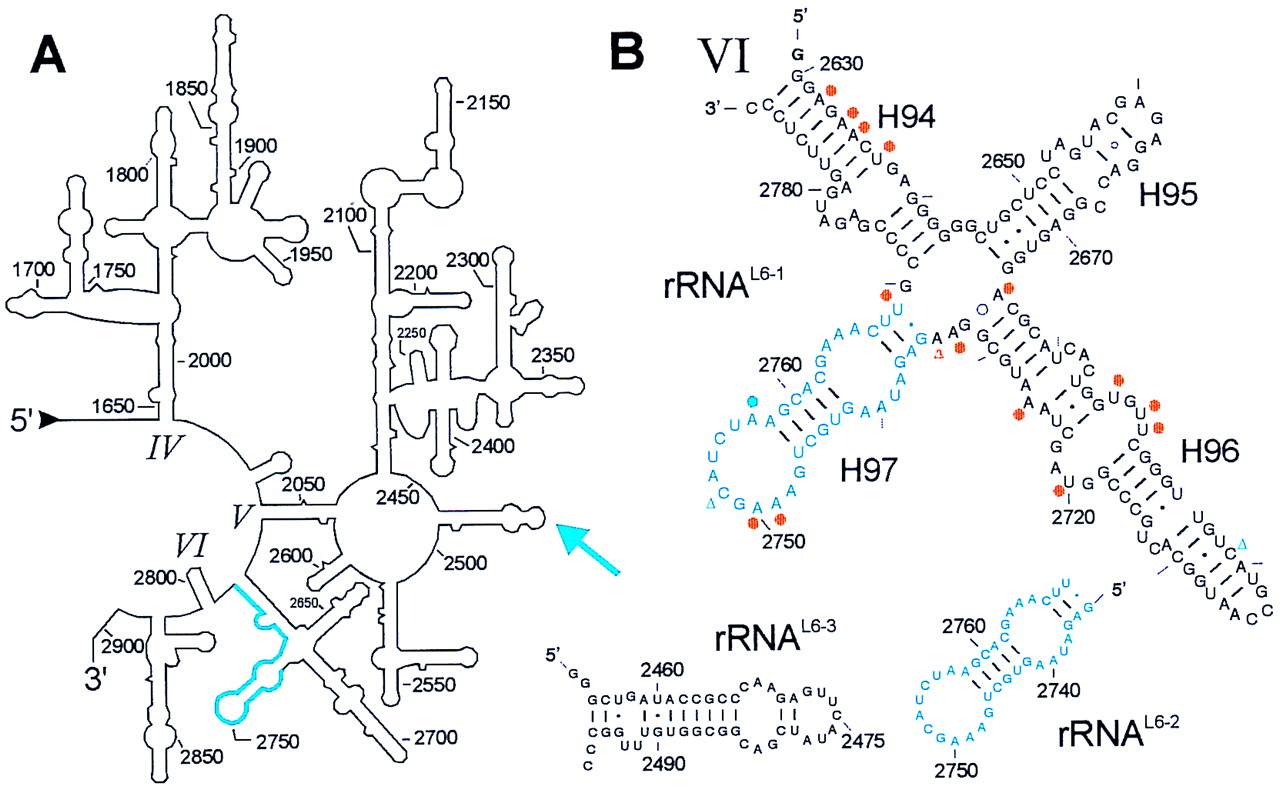screen for rrna contamination in rna