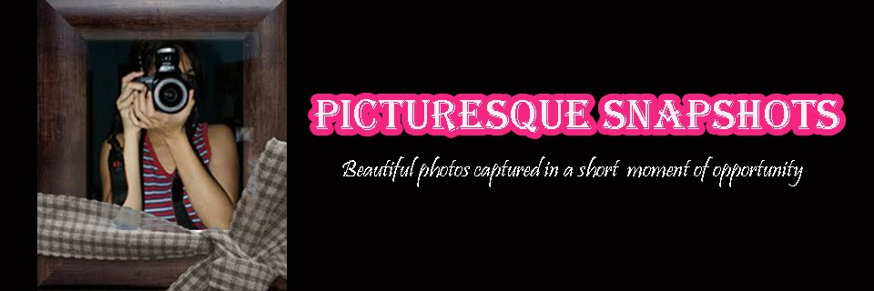 Picturesque Snapshots