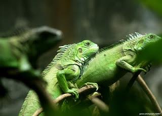 Tips dan Trik Fotografi....!!!| http://poerwalaksana.blogspot.com/