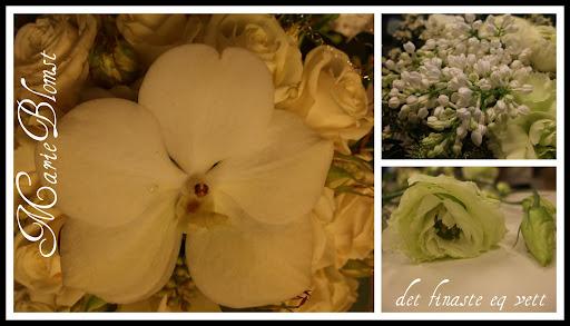Marie`s Blomster Blogg