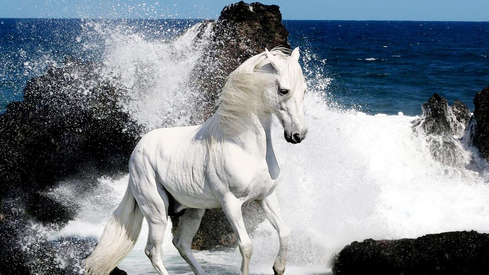 Horse HD Wallpapers Free Wallpaper Downloads Horse HD