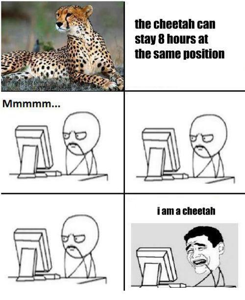 Here You Will Find Many Troll Jokes.: My Story- Im A Cheetah