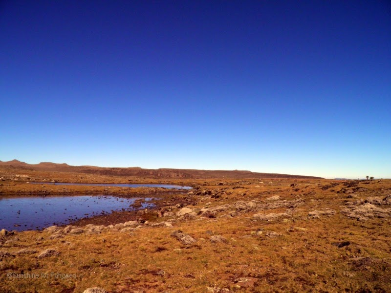 The crane lakes on the Sanetti Plateau