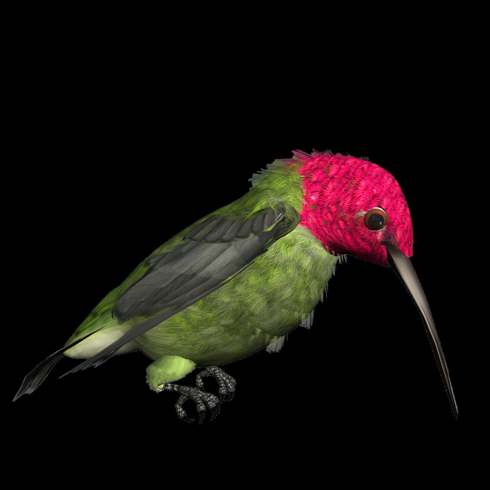 free png Hummingbird Clipart images transparent