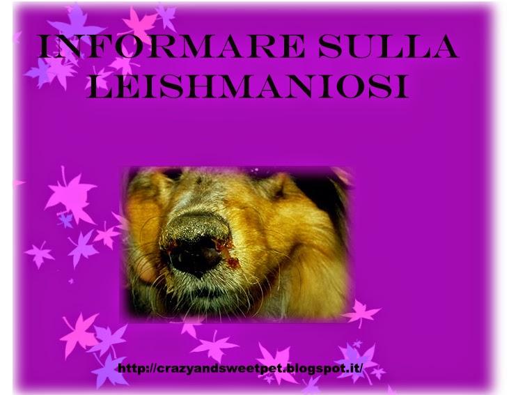 Leishmania-foto-cane