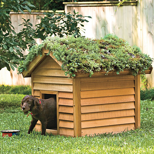http://4.bp.blogspot.com/-Qi9NQERYO8M/T6ra-2OUvvI/AAAAAAAAEQo/gkv2inmaFDw/s400/cool-digs-for-dogs-x.jpg
