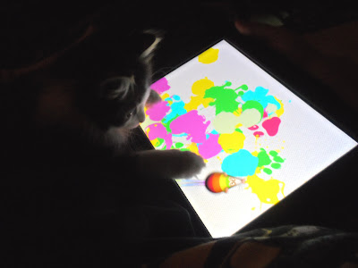 Anakin two legged cat plaing the ipad game paint for cats
