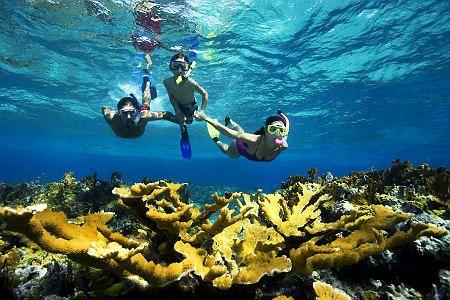 Snorkeling in Phi Phi island