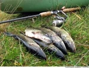 И каждый рыболов еще добавит от себя
