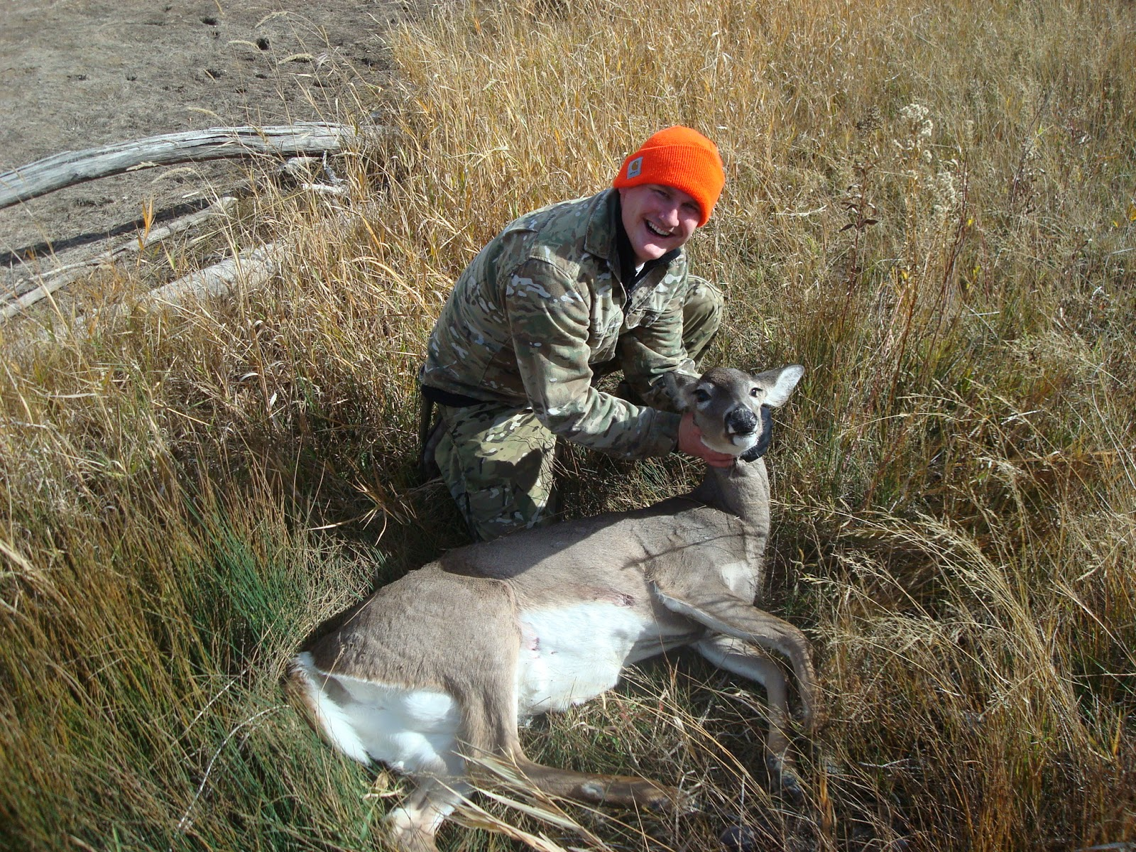 Whitetail Doe in Idaho