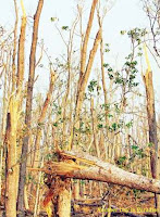 Mighty Aila destroy Sundarban