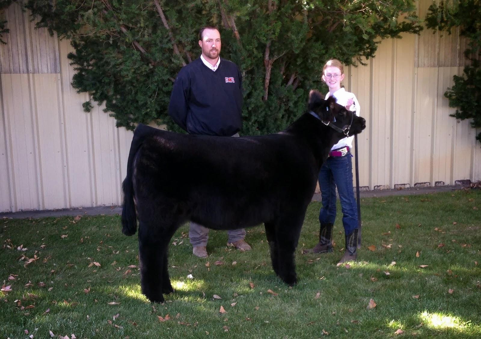 2013 Champion Steer