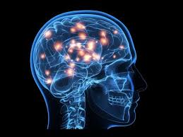 Nova Sciencenow: How Smart Can We Get???