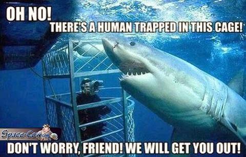 funny shark picture humor