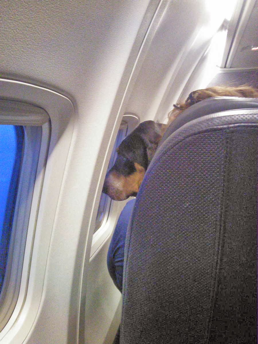 Cute dogs - part 3 (50 pics), dog on airplane