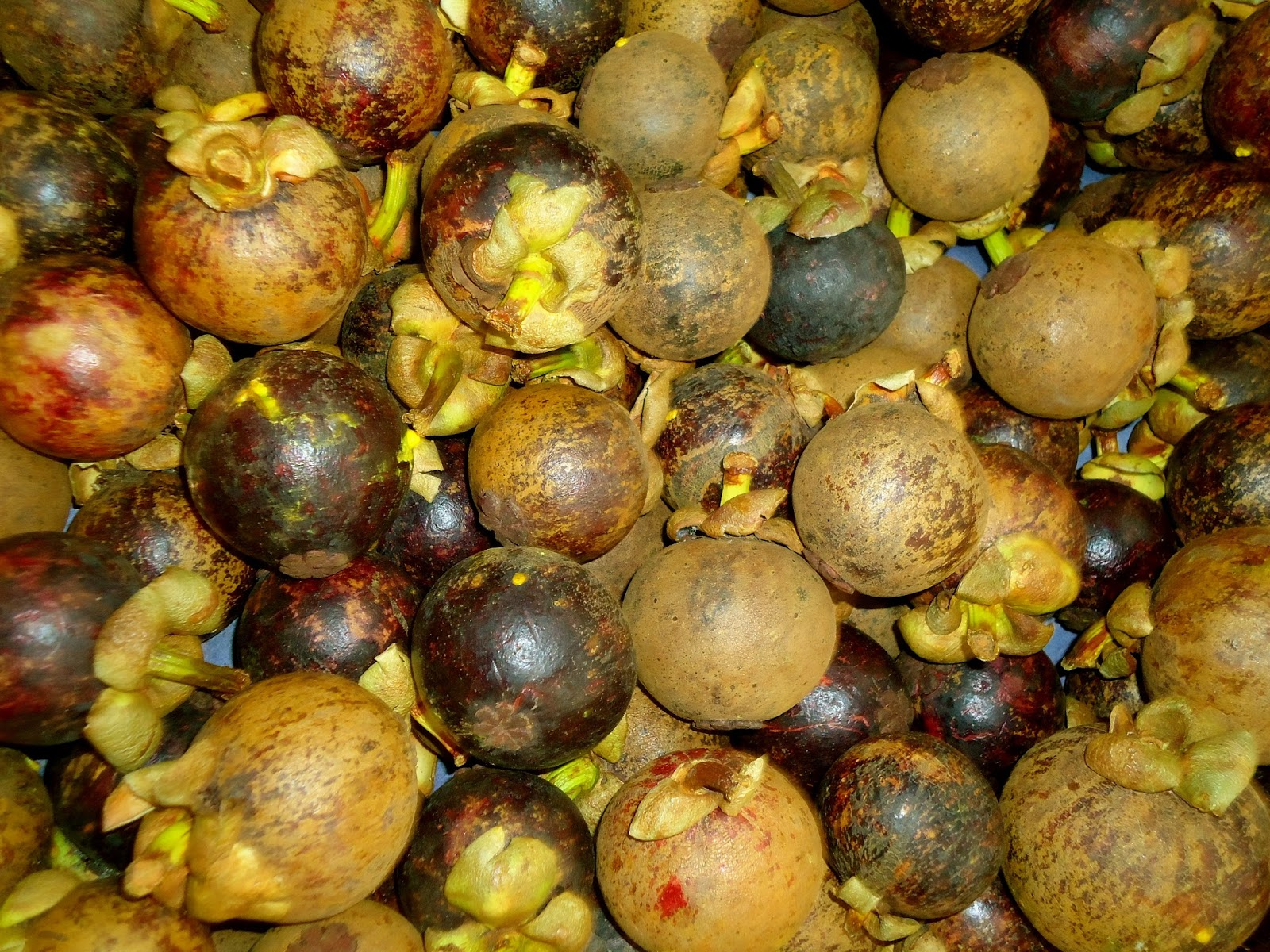 Wandering North: Colombian Fruit